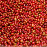 Malawi's Coffee Industry Profile